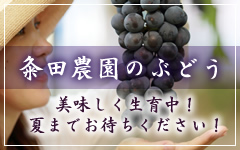 粂田農園のブドウ