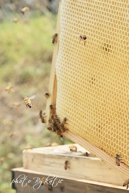 蜜蜂の建造物
