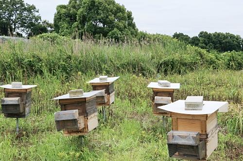 ミツバチのすみか
