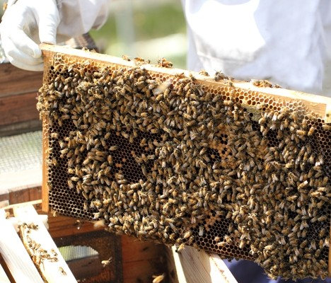 私が養蜂家になったきっかけと、純国産はちみつに拘る理由